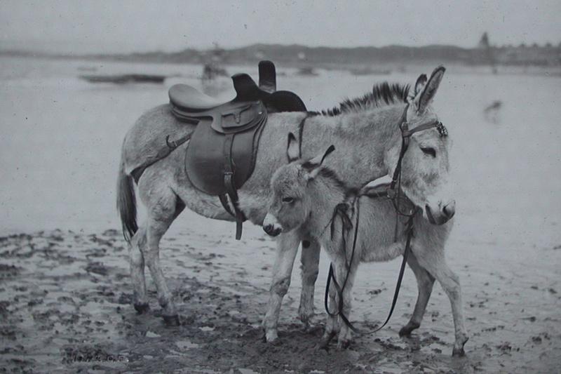 Victorian Donkeys On The Beach c.1878