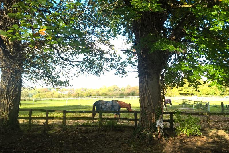 Horses At Fairlawn Farm Carshalton