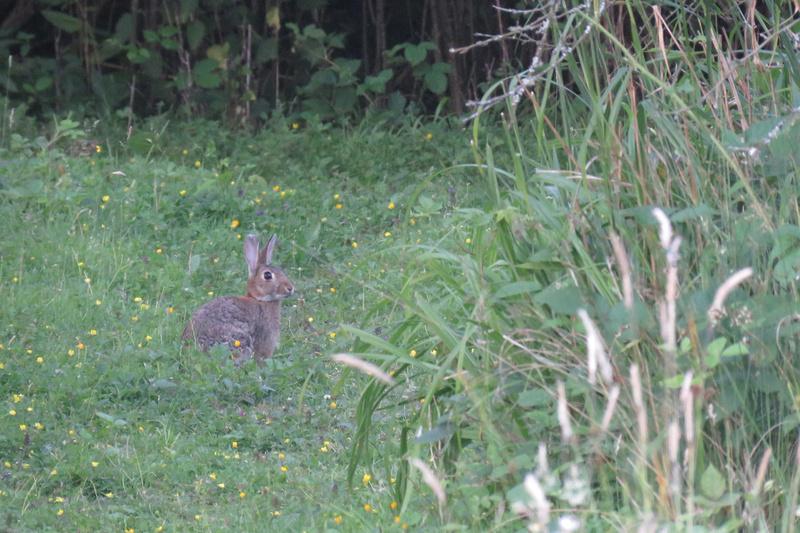 A Rabbit At Apple Acres Farm Kent