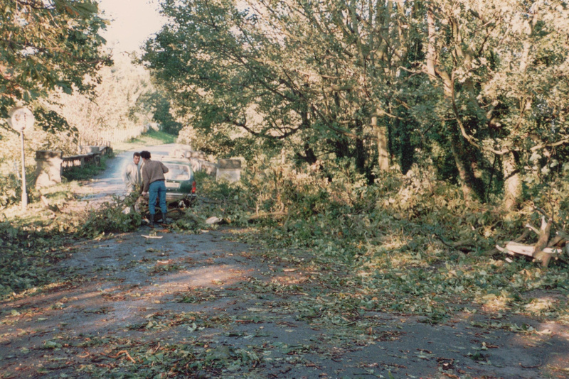 Clearing Up In Ashtead Park After The Great Storm Of 1987