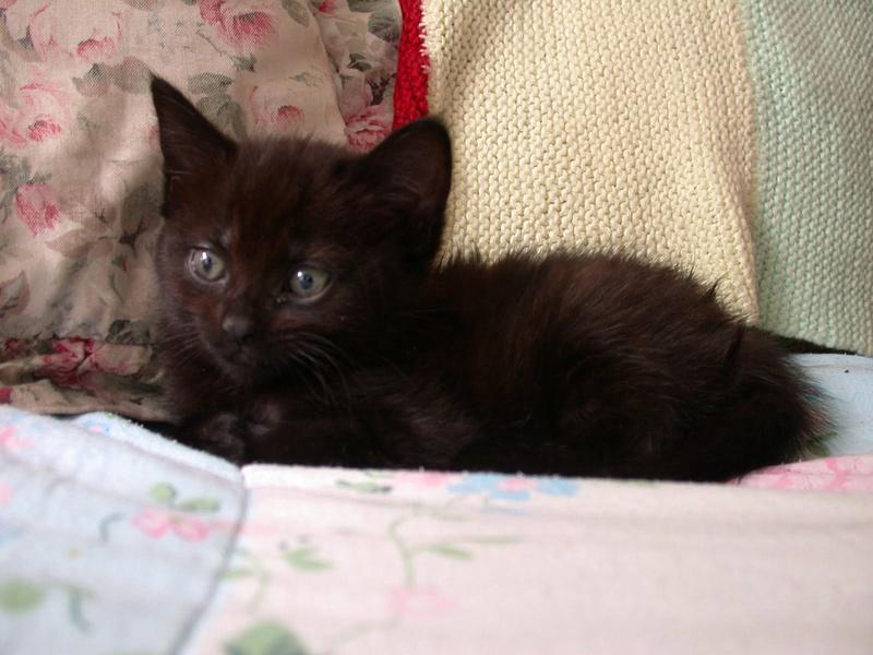 Cleo The Kitten