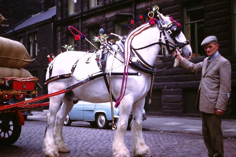 May Day Shire Horse Bradford 1950s