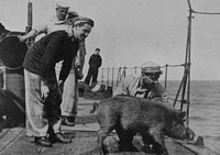 A Pet On Board One Of The British Naval Craft In The Dardanelles