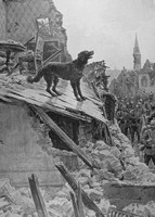 A Dog Trying To Defend His Home Duing The German Occupation Of Vailly On The Aisne