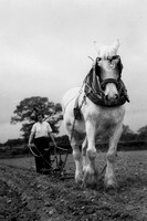 A Girl Ploughing A Field With A Shire Horse In Staffordshire c1950