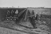 Plantng Potatoes Near Chatteris Cambridgeshire 1930s