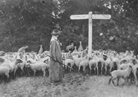 A Woman Shepherdess In Epsom