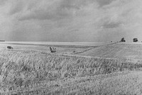 Farming At Laxton Nottinghamshire c.1950