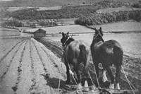 Ploughing In The Eden Valley Cumberland 1930s