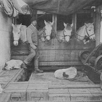 Captain Oates With Ponies And Dogs On Board The Terra Nova