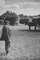 A Farmer Watches Harvest Stacking Wendens Ambo Essex 1930s