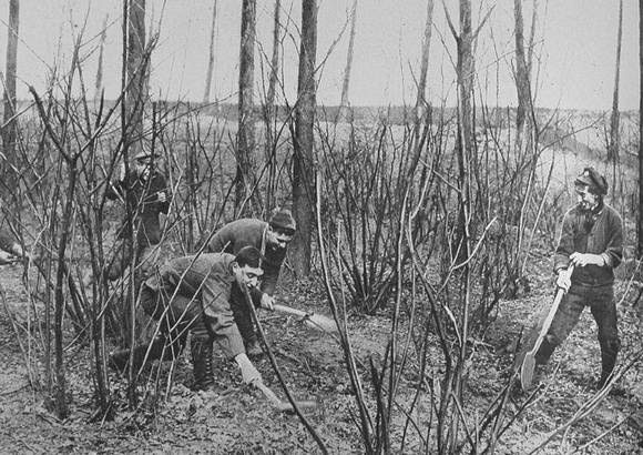 Canadian Soldiers Rat Catching On The Western Front