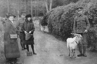The Goat Presented As A Mascot By His Majesty The King To The 7th Royal Welsh Fusiliers