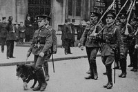 The 1st Royal Fusiliers With Their Mascot 1914