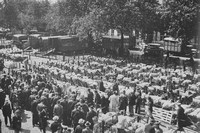 A Sheep Sale At Norwich Cattle Market 1930s